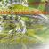Pembedahan Ular Pucuk Pohon- Seri Mimbar akademik #60